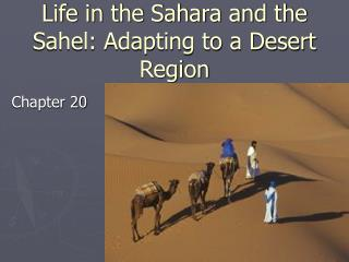 Life in the Sahara and the Sahel: Adapting to a Desert Region