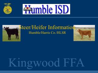 Humble I.S.D. Steers