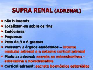 SUPRA RENAL (ADRENAL)