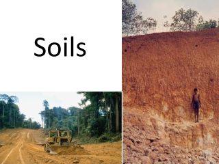 Tropical soils