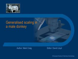 Generalised scaling in a male donkey
