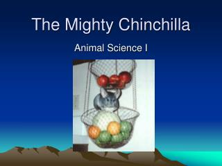 The Mighty Chinchilla