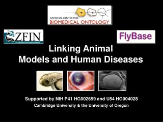 Linking Animal  Models and Human Diseases