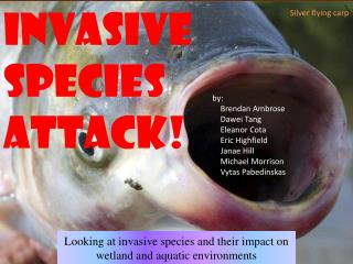 invasive  species  Attack!