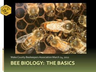 Bee biology: the basics