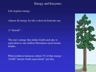 Energy and Enzymes