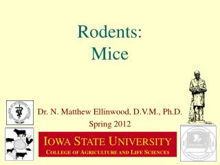 Rodents: Mice