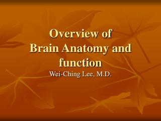 Overview of  Brain Anatomy and function