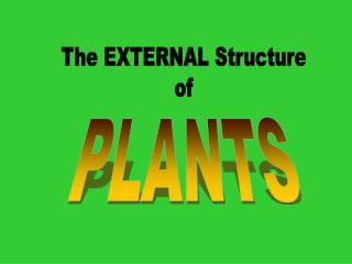 The EXTERNAL Structure of