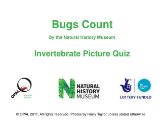 Bugs Count by the Natural History Museum Invertebrate Picture Quiz