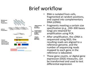Brief workflow