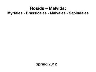 Rosids – Malvids : Myrtales - Brassicales - Malvales - Sapindales