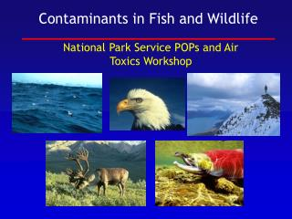 Contaminants in Fish and Wildlife