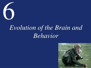 Evolution of the Brain and Behavior