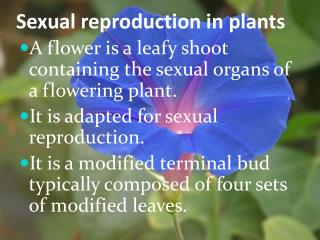Sexual reproductive system of flowering plants ppt