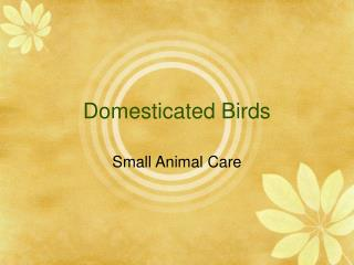 Domesticated Birds