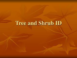 Tree and Shrub ID
