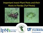Important Insect Plant Pests and their Hosts in Florida Turf Pests