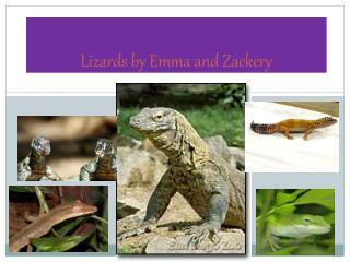 Lizards by E mma and Zackery