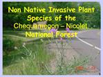 Non Native Invasive Plant Species of the Chequamegon   Nicolet National Forest