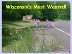 Wisconsin s Most Wanted