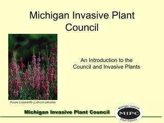 Michigan Invasive Plant Council