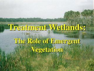 Treatment Wetlands: The Role of Emergent Vegetation
