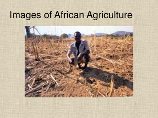 Images of African Agriculture