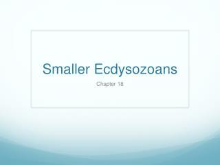Smaller Ecdysozoans