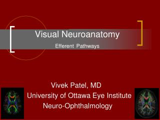 Visual Neuroanatomy Efferent Pathways