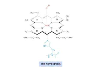 The heme group.