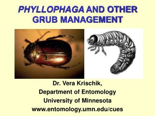 PHYLLOPHAGA AND OTHER GRUB MANAGEMENT