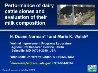 Performance of dairy cattle clones and evaluation of their milk composition