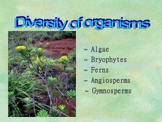 ~ Algae                   ~ Bryophytes                   ~ Ferns                   ~ Angiosperms              ~ Gymnospe