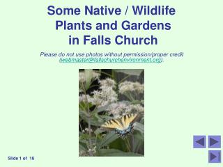 Some Native / Wildlife  Plants and Gardens  in Falls Church