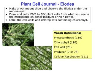 Plant Cell Journal - Elodea