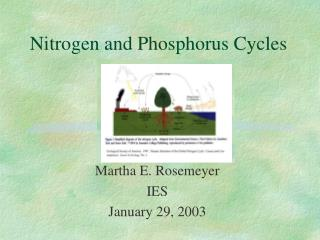 Nitrogen and Phosphorus Cycles