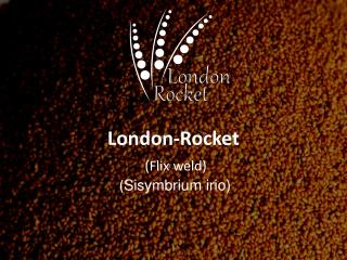 London-Rocket ( Flix  weld)  ( Sisymbrium irio )