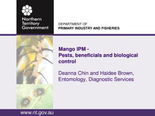 Mango IPM - Pests,  beneficials  and biological control