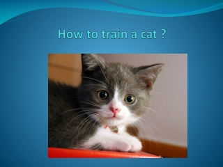 How to train acat