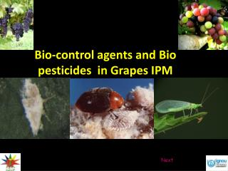 Bio-control agents and Bio pesticides  in Grapes IPM