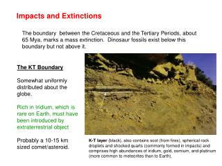 Impacts and Extinctions