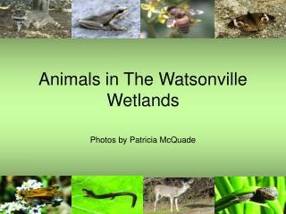 Animals in The Watsonville Wetlands