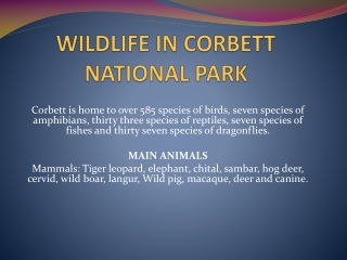 WILDLIFE IN CORBETT NATIONAL PARK