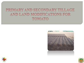 PRIMARY AND SECONDARY TILLAGE AND LAND MODIFICATIONS FOR TOMATO