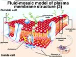 Plasma Membrane Structure and Function