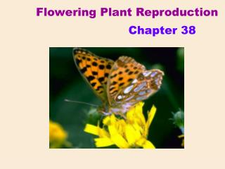 Flowering Plant Reproduction