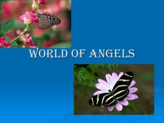 WORLD OF ANGELS