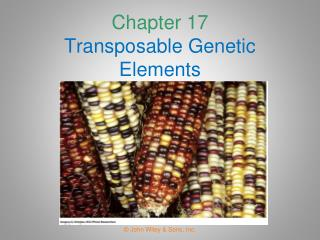 Chapter 17 Transposable Genetic Elements
