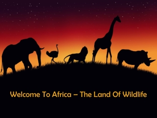 Welcome To Africa – The Land Of Wildlife